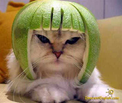 cat watermelon hat